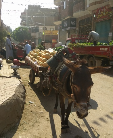 A traditional donkey cart moves through the dirt roads of Giza.